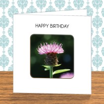 Thistle Coaster Card 4