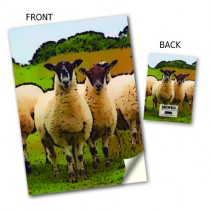 Inquisitve Sheep Stitched Notebooks